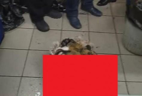 【閲覧注意】モスクワのレストランに警察が突入、キッチンに食材のトラやヒョウ