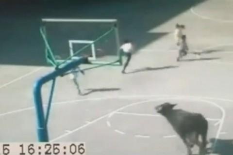 【動画】中国で学校の校庭に侵入してくるのが犬どころじゃない。これは死人が出るわ