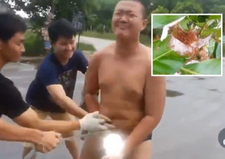 【動画】赤アリの大群をチ●コに入れて泣き叫ぶ中国の少年めっちゃ笑った