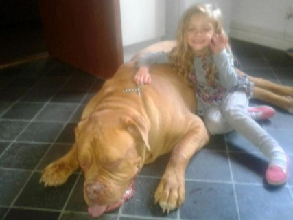 """【閲覧注意】娘に怪我をさせた犬を、父親は """"こうした"""""""
