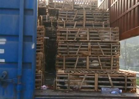 中国のレストランに送られようとしていた2000匹の生物をご覧ください・・・