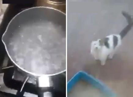 ネット上が騒然となっているFacebookのビデオ。「野良猫に熱湯かけてやった」