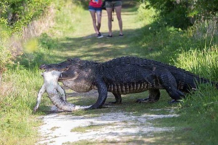 hungry_crocodile_03