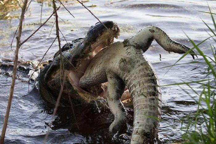 hungry_crocodile_04