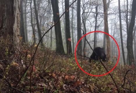 森のクマさん、実際に会ったら怖すぎた・・・(動画)