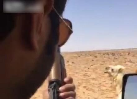 【閲覧注意】兄弟がラクダに噛まれて重傷 ⇒ そのラクダを見つけたので…
