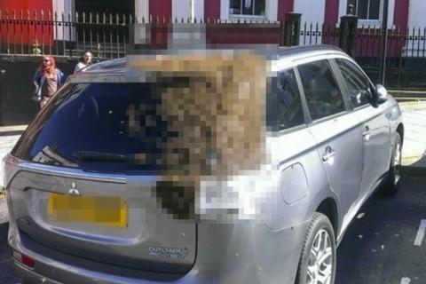 【画像】車の中にたった1匹の「女王バチ」が入った結果・・・