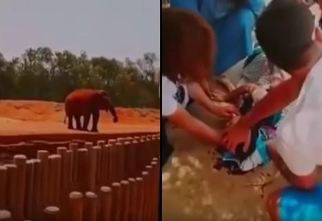 動物園で象が石を投げ、7歳の少女が死ぬ事件が発生
