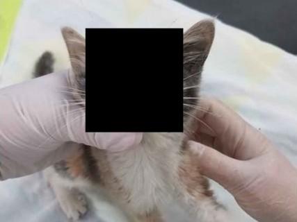【閲覧注意】猫からとんでもないものが出てきた・・・(動画)