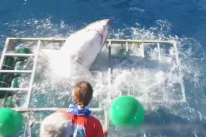 【動画】檻に入ってホオジロザメを見よう ⇒ ホオジロザメ丸ごと1匹が中に入ってくる…