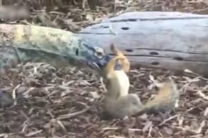 「リス逃げてー!」動物園のコモドドラゴン、子供たちに現実を突きつける