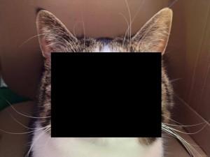 ダウン症の猫・・・(画像)