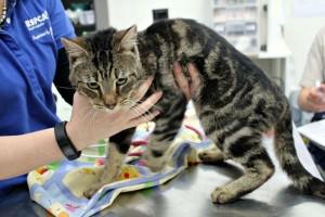 【閲覧注意】猫14匹を家に閉じ込めて数か月放置した結果・・・