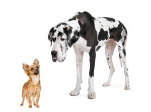 【閲覧注意】中型犬と小型犬がケンカした結果・・・(動画)