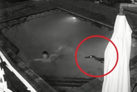 ホテルのプールで泳ごうー! ⇒ とんでもない生物に襲われる映像・・・