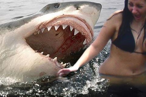 【超!閲覧注意】今さらだけど、伝説となった「サメに襲われた少女」の画像