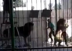 サーカスの調教師がライオンに殺される瞬間。これは子供トラウマだわ…(動画)