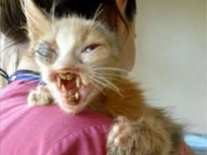 """【画像】""""悪魔の猫"""" を保護した結果・・・"""