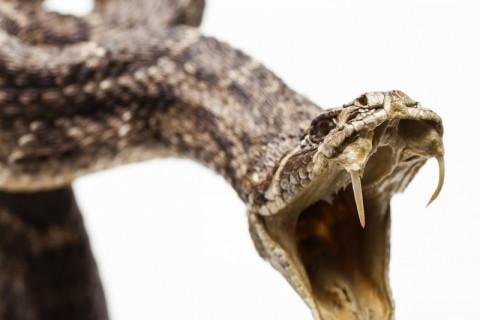 【閲覧注意】巨大なヘビを、絶対に素人が捕まえようとしてはいけない…(動画)