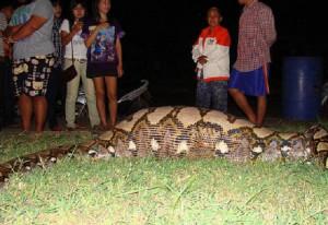 【閲覧注意】インドネシアで女の子が行方不明に ⇒ 近くで発見された巨大なヘビのお腹から出てきたもの・・・