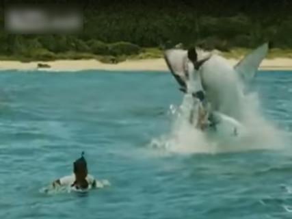 この映像マジ!? ガチで人間がサメに食われる瞬間が恐ろしすぎるんだけど…