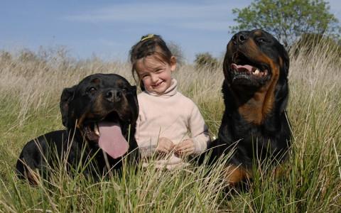 【閲覧注意】狂暴な3匹の犬が逃げ出し、そこに5歳の女の子がいた結果・・・(画像)