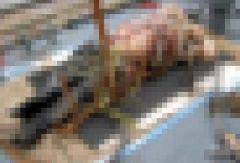 """【閲覧注意】ヤクザの """"絶対にバレてはいけない秘密"""" が海から引き上げられる…(画像)"""
