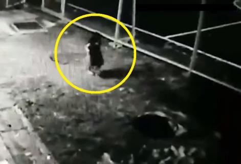 """【閲覧注意】行方不明の4歳の幼女、周辺の監視カメラに """"親が生存を諦める"""" 映像が…"""