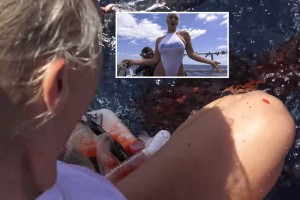 【閲覧注意】AV女優、サメに足を噛みちぎられ発狂・・・ (動画)