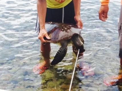 とある島国に行った観光客「ウミガメ殺した!」⇒ ネットにアップした結果、人生終了・・・