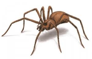 【閲覧注意】謎の毒蜘蛛に噛まれたんだが腕がヤバイ・・・