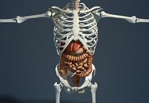 【超!閲覧注意】肛門から内臓が噴き出した人間をご覧ください…