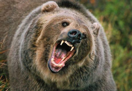 【閲覧注意】「女性が山でクマに襲われ奇跡の生還!」 ⇒ いや画像見たら・・・
