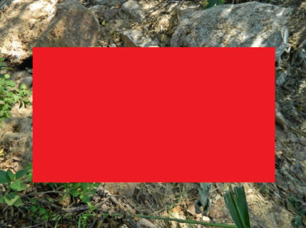 【閲覧注意】山の中でクソヤバイ状態の女性が発見される・・・(画像)