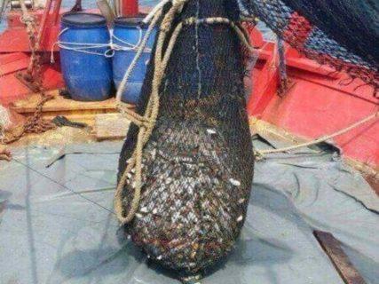 """【閲覧注意】漁師さん、網で捕まえた大量の魚の中に、""""タブーとされるもの"""" を発見してしまう・・・"""