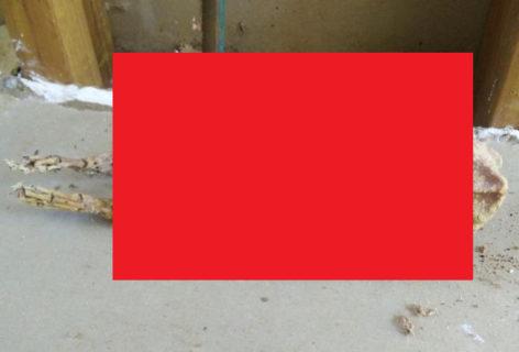 【画像】家のリフォームしてたら壁から・・・これ絶対ヤバいよな