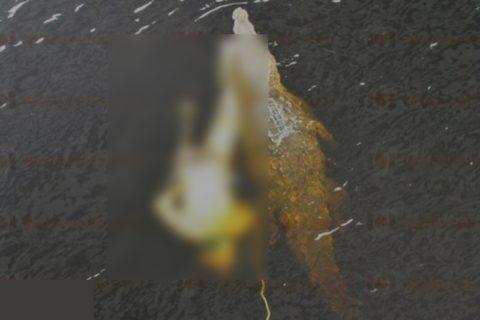 【閲覧注意】メキシコのギャング、「ワニがうようよいる川」に人間を投げ込み食われる様を楽しんだよう