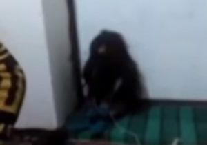 """コーカサス山脈で """"誰も見た事がない"""" 未確認生物が発見される!(動画)"""