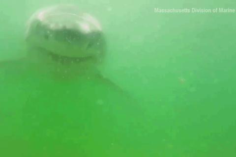 ホオジロザメに食われる人の目線カメラがマジでトラウマレベル