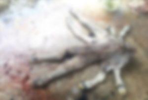 【閲覧注意】カンボジアの村で「神」と呼ばれている8本足の化け物がヤバイ(画像)