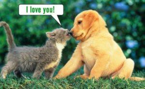 【閲覧注意】犬と猫が好きな人は絶対に見ないでください (動画)