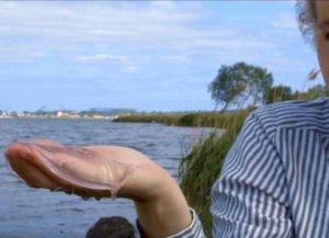 【画像】クラゲをアルコールに漬けると信じられない事が起こる!世界中で話題に
