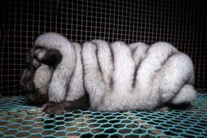"""この世の闇。動物保護団体、""""ヤバい生物"""" を発見してしまう・・・(画像)"""