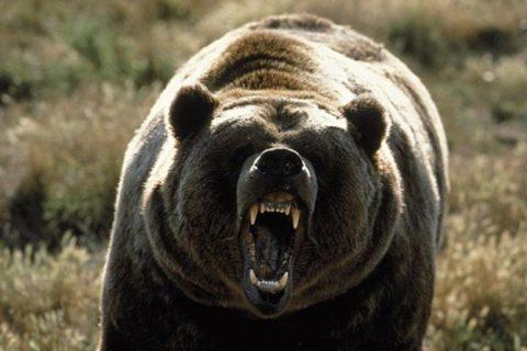 【閲覧注意】この前のクマに襲われた人間の画像がなぜか流出。マジで常軌を逸してる