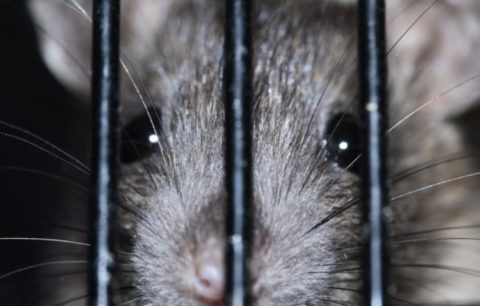 【閲覧注意】最近の刑務所の飯がヤバいと話題に・・・(動画)
