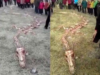 人類史上最大の発見か。中国で長さ20メートルの「龍(ドラゴン)」の骨格が見つかる(動画)