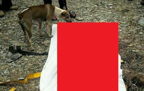 【閲覧注意】めちゃめちゃなついてる犬。ご主人が死亡して動かなくなった結果・・・(画像)