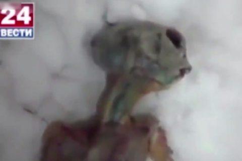 【動画】ロシアでエイリアン(地球外生命体)が発見される・・・これはアウト