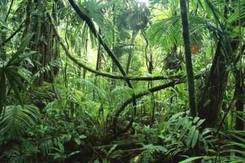 【閲覧注意】ジャングルに入ったまま帰って来なかった70歳女性が発見されたんだがヤバすぎる(画像)