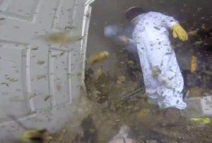 スズメバチの駆除業者がアップした「20年やってきて一番ヤバイ現場」が凄すぎると話題に